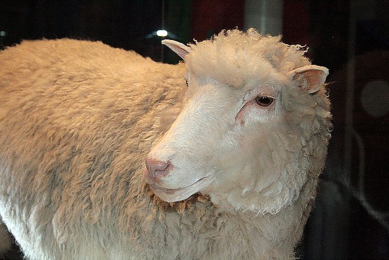 an introduction to the history of cloning sheep dolly Back at the start of the century, openlearn - or open2net as we were then known - investigated dolly the sheep and the implications of cloning animals a lot has happened in the years since then time to catch up.